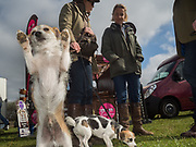 MONKEY; DIBBY; OWNER: LUCY INGS-CHAMBERS, Heythrop Point to Point, Cocklebarrow, 2 April 2017.