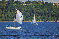 Yachts sailing on Puget Sound, near Seattle, Washington State, USA, 200809060978.<br />