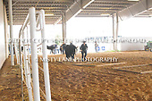 46. GROUND OBSTACLES IN-HAND SR HORSE