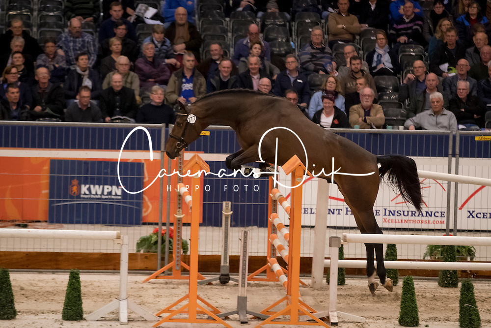 277 - Jupiter<br /> KWPN Hengstenkeuring 2017<br /> © Dirk Caremans<br /> 01/02/2017