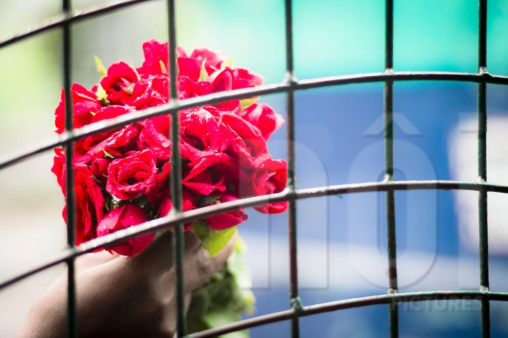 Bunch of roses seen through a grid, Dhaka, Bangladesh, Asia