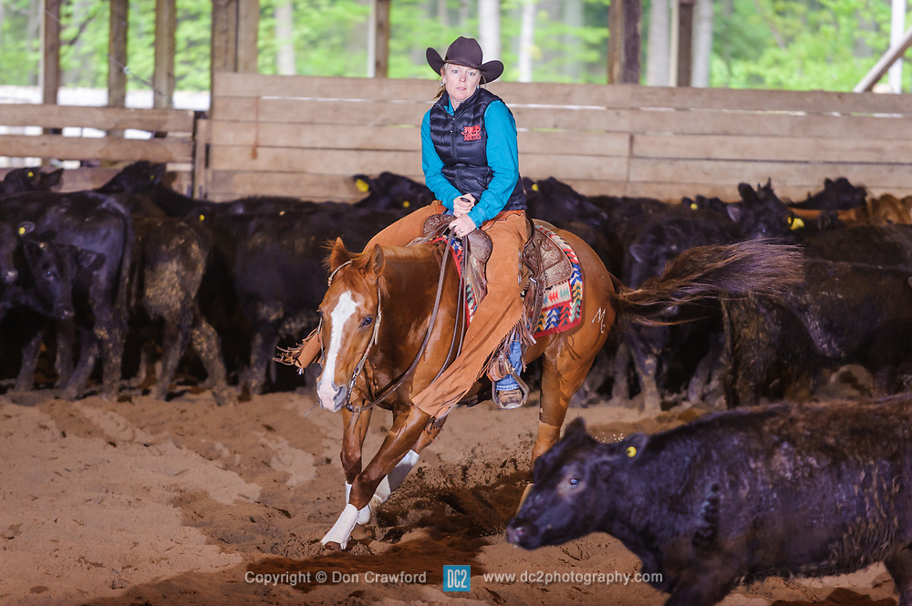May 21, 2017 - Minshall Farm Cutting 4, held at Minshall Farms, Hillsburgh Ontario. The event was put on by the Ontario Cutting Horse Association. Riding in the 35,000 Non-Pro Class is Laurie Reed on Big Time Moves owned by the rider.