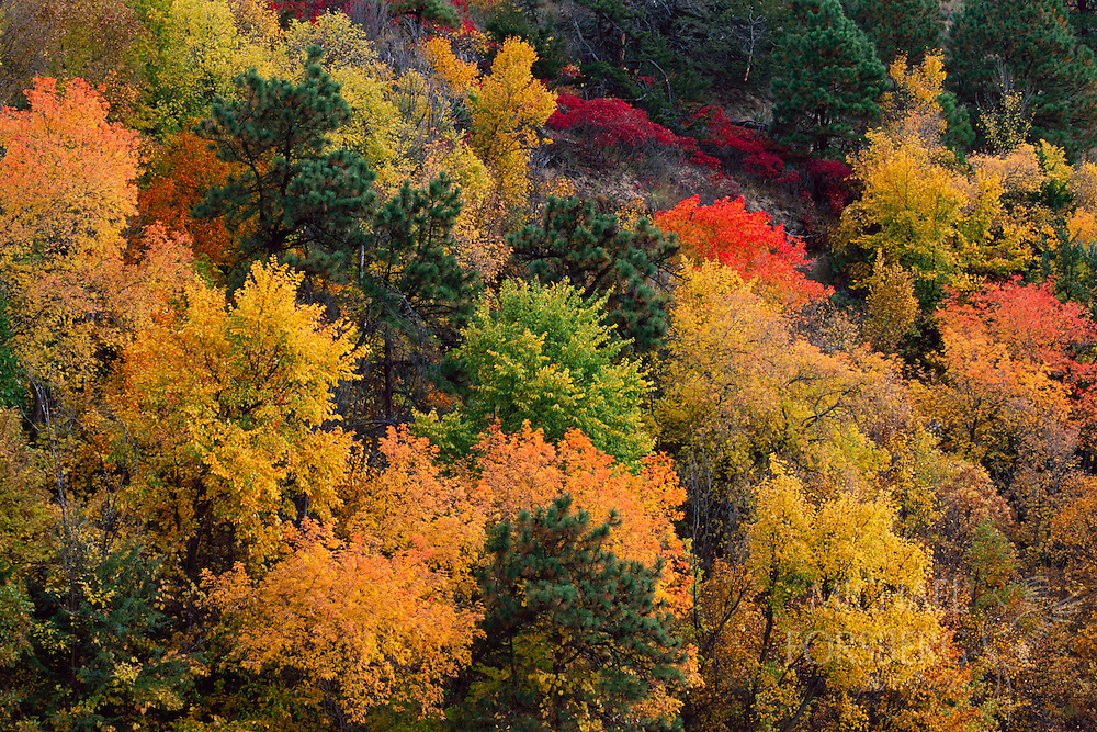 Bright colors of leaves in fall on trees along the Niobrara River.  Fort Niobrara National Wildlife Refuge, Nebraska.