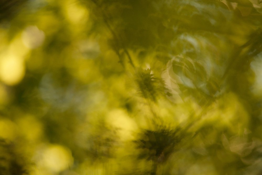 Leaves in movement, abstract, Auvergne, France