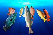 Digitally enhanced image of various fish that appear to be surfacing towards the water's surface