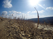 Israel. The Negev desert landscape