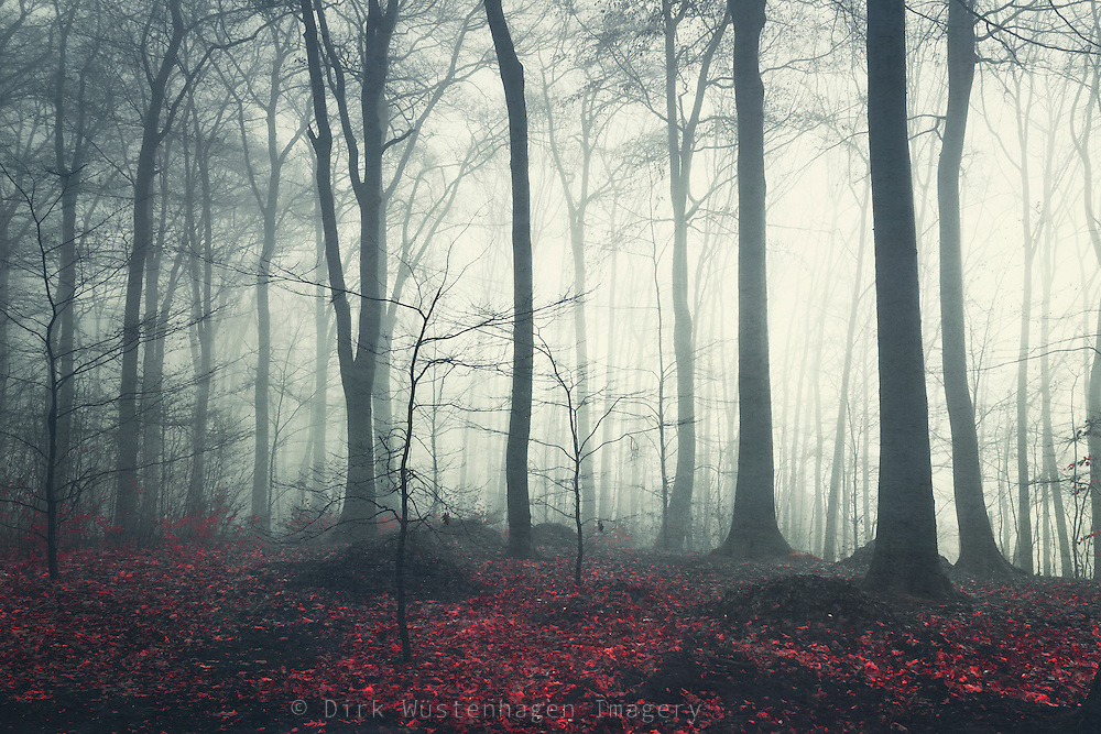 Nebliger Winterwald im gegenlicht, Wuppertal, Deutschland