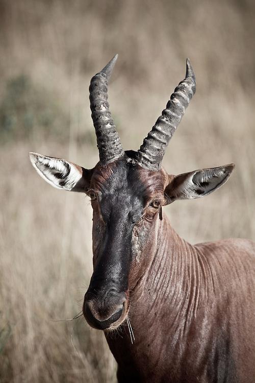 Tobi, Maasai Mara