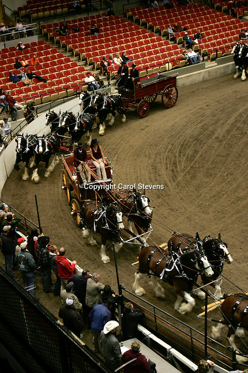 World Clydesdale Show 2011  Hitches