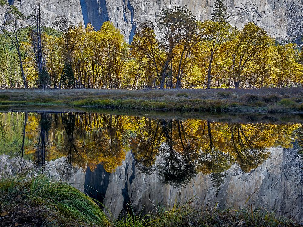 Oak reflections, El Capitan and the Merced River, Yosemite National Park, California 2012