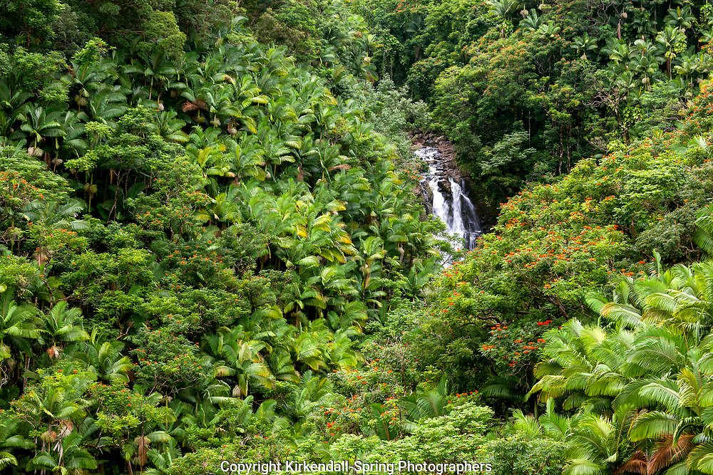 HI00235-00...HAWAI'I - Nanue falls along Akoni Pule Highyay (Highway 270) on the island of Hawai'i.