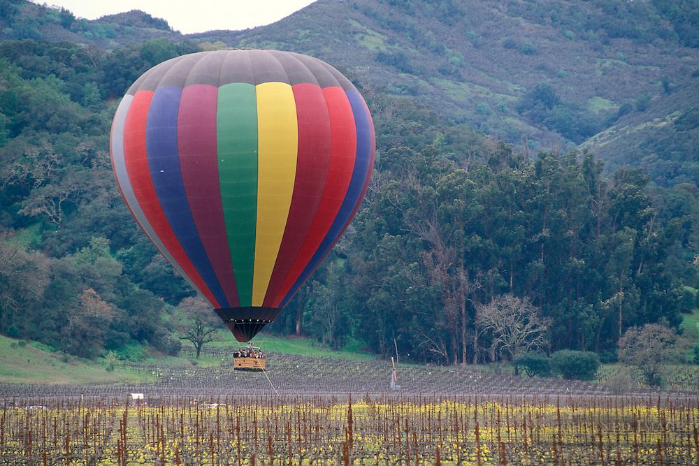 Hot air balloon landing in vineyard below hills, Napa Valley Wine Country, California