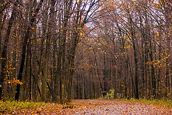 30 October 2009:  a leaf covered road meanders through leafless trees in mid fall at Moraine View State Park near LeRoy Illinois