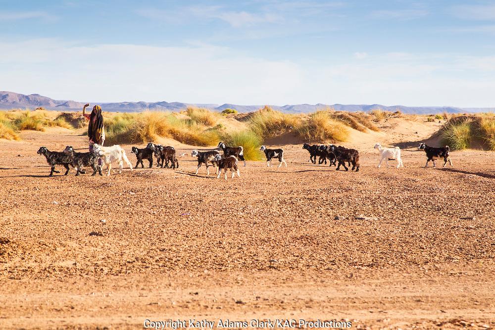 Arab woman; herding goats, Erfoud; Morocco; People; Sahara Desert