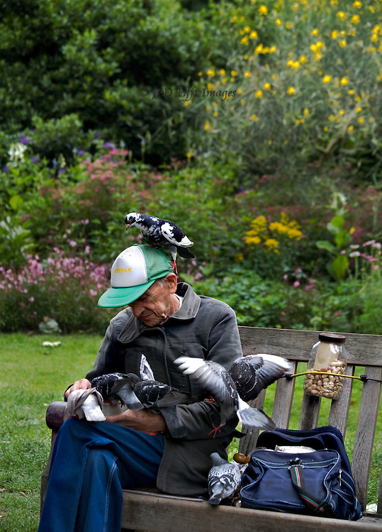 London resident, an elderly man in a baseball cap, seated on a bench in St. James Park feeding cluster of about six pigeons.  The birds flutter around, used to his handouts.  One sits on his head.  They expect him, as he comes every day with their meal.  In the background, a summer flowering in the park garden.