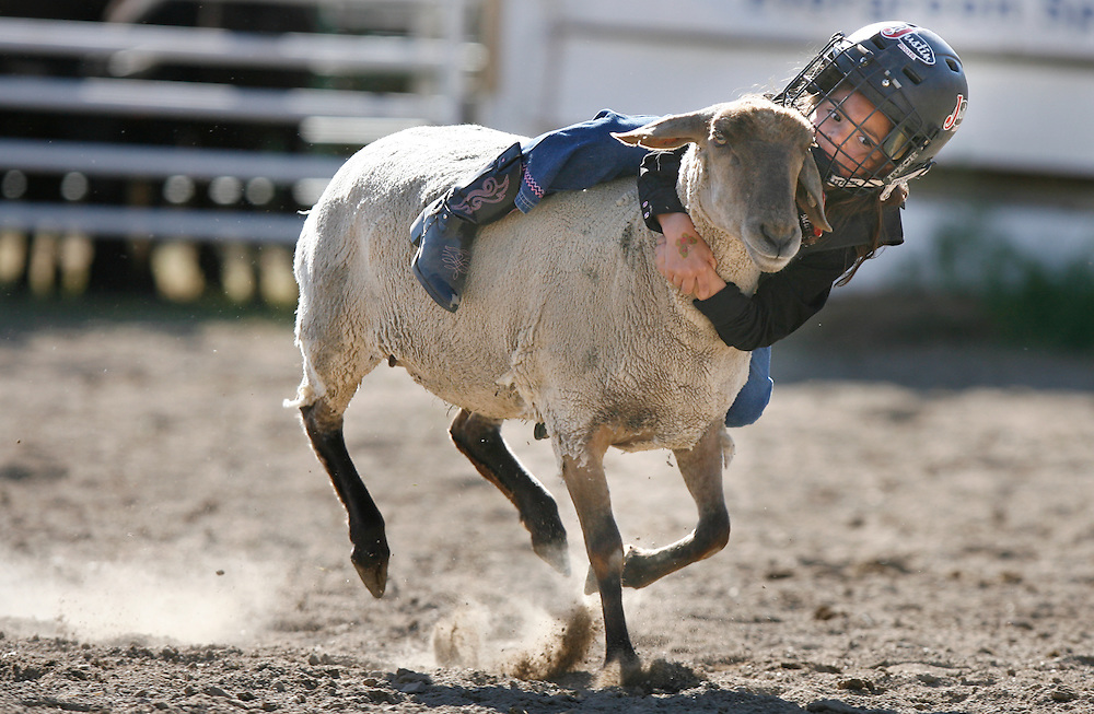 061408-Evergreen, CO-muttonbustin-5 year old Alyssa Cooper, of Evergreen, hangs on tight during the mutton bustin competition for kids Saturday, June 14, 2008 at the Evergreen Rodeo Grounds..Photo By Matthew Jonas/Evergreen Newspapers/Photo Editor
