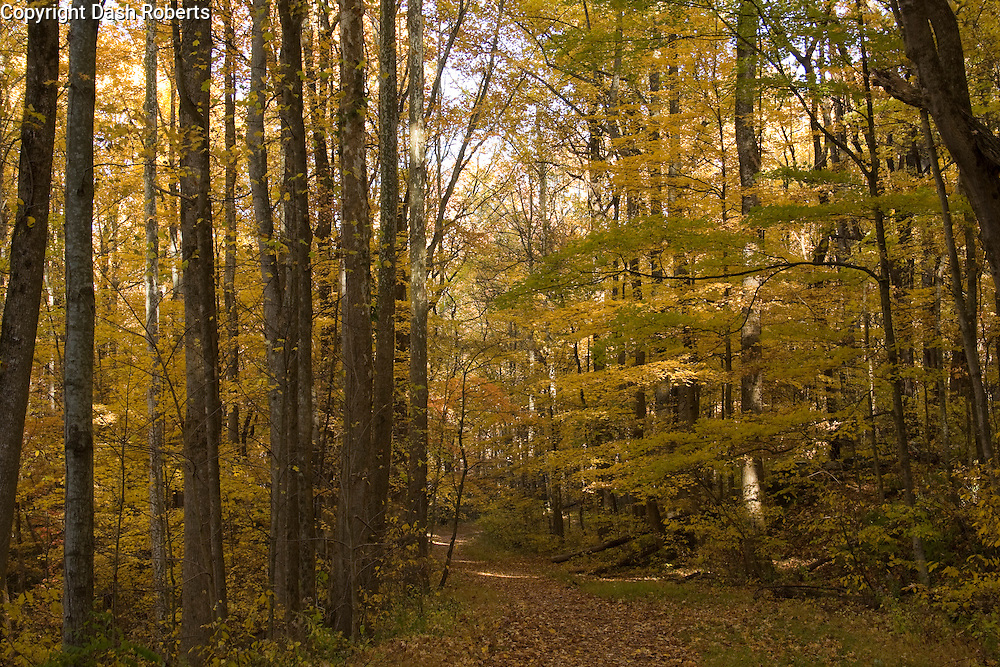 Fall colors along a quiet pathway in the Great Smoky Mountains National Park.