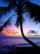 Oahu Sunset, palms, tropical, Tropical Sunset
