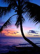 Oahu Sunset, palms, tropical, Tropical Sunset