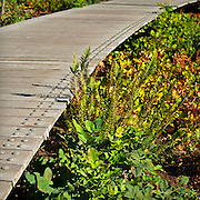 Boardwalk detail of stormwater facilities, Elizabeth Caruthers Park, Portland, Oregon.