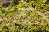 Nature details, Assateage Island National Seashore, Maryland, USA.