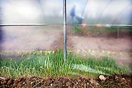 381223-reportage over bioboerderij t'meulenhuys in bouwel-eigenaars Nancy Verschueren en Geert van Turnhout-Molenstraat Bouwel-foto's Joren De Weerdt