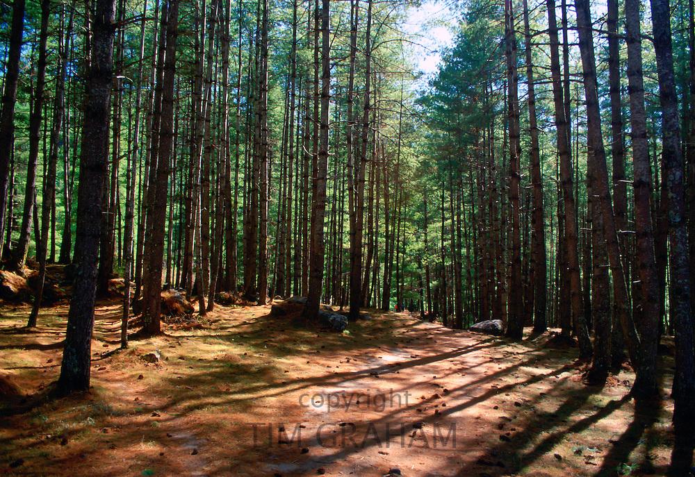 Forest, British Columbia, Canada