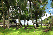 Palm trees by the sea on the North coast of the island of Hiva Oa, in the Marquesas Islands, French Polynesia. Picture by Manuel Cohen