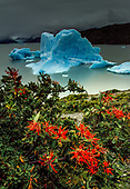 PATAGONIA - CHILE IMAGE GALLERY