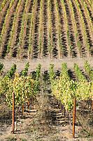 J Rochioli Vineyards & Winery, Healdsburg, California