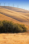 Altamont Pass Wind Farm in Northern California