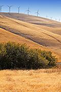 Altamont Pass Wind Farm in Northern California