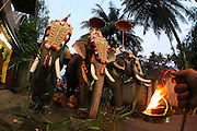 Elephant Procession<br />