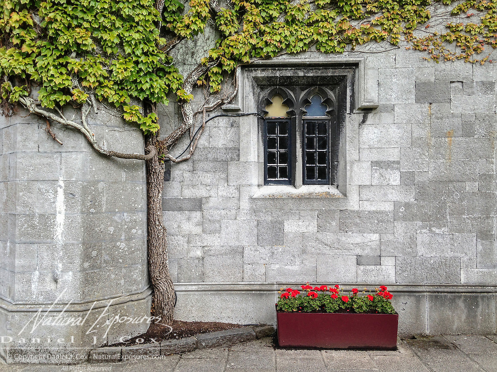 Ivy-covered walls of National University of Ireland, Galway.