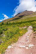Iceberg Lake trail, Many Glacier, Glacier National Park, Montana USA