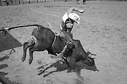 Bull rider, Clallam County Fair rodeo
