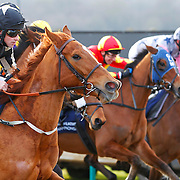 Lingfield 2nd February