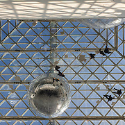 People exploring Tomás Saraceno's 'in orbit', a 2500m/2 three-level web of steel wire suspended across the cupola of the K21 building at the Kunstsammlung Nordrhein-Westfalen (Federal Art Collection of North Rhine Westphalia) in Dusseldorf, Germany on 1 October 2015. Built around six large inflated spheres, at a height of over 25m, the construction is inspired by natural spiders' webs.