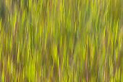 Motion blur, autumn, grasses, Sheldon Lake State Park, Houston, Texas.