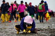 "Woman collecting mussels and seaweet on the open ""Mysterious Sea Road"" at Hoedong shore (Jindo island). Jindo is the 3rd biggest island in South Korea located in the South-West end of the country and famous for the ""Mysterious Sea Route"" or ""Moses Miracle"". Every spring thousands flock to the shores of Jindo to walk the mysterious route that stretches roughly three kilometers from Hoedong to the distant island of Modo. Materializing from the rise and fall of the tides, the divide can reach as wide as forty meters."