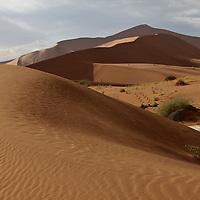 Deserts + Grasslands
