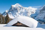 Winterwanderung oben Grindelwald mit Sicht auf schneebedeckte Wetterhorn oben Grosse Scheidegg in Jungfrauregion