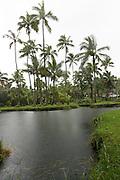 Hilo, Hawaii, USA.Scenic city park