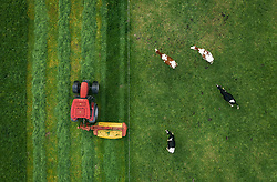 THEMENBILD - Milchkühe blicken auf einem Landwirt, der mit seinem Traktor das Gras auf einer Weide mäht, aufgenommen am 16. Mai 2019 in Piesendorf, Oesterreich // Dairy cows look at a farmer mowing the grass on a pasture with his tractor. in Piesendorf, Austria on 2019/05/16. EXPA Pictures © 2019, PhotoCredit: EXPA/ JFK
