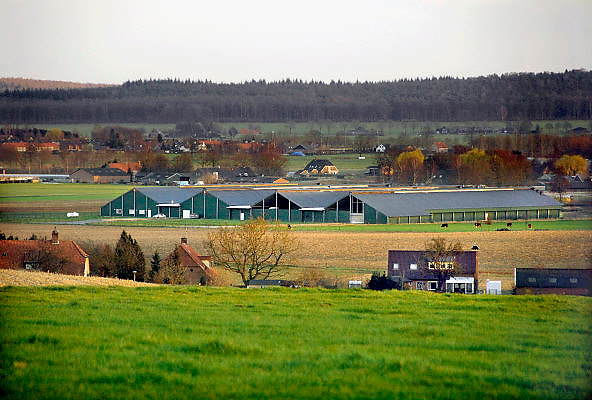 Nederland, Groesbeek, 27-2-2008Raad van State vernietigt milieuvergunning mega kippenstal. In 2002 bouwde agrarisch ondernemer Van Deurzen een nieuw stallencomplex, legbatterij, voor 300.000 kippen in Groesbeek. De stallen liggen pal in de zichtlijn van de bewoners van een villapark. Voor deze locatie blijkt het, vanwege de stanknormen (Wet Geurhinder), wettelijk onmogelijk om een milieuvergunning af te geven.Dit heeft de gemeente er niet van weerhouden om al drie keer een vergunning af te geven. Deze vergunning is tot twee maal door de Raad van State vernietigd. Tegen de derde vergunning is nu met succes beroep aangetekend. Al met al staat het bedrijf er al vijf jaar, waarvan driekwart van de tijd illegaal.Foto: Flip Franssen/Hollandse Hoogte