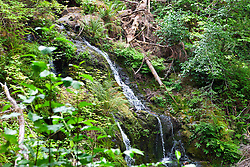 Cascade Falls, outside of Olympic National Park, Lake Quinault Rain Forest, Washington, United States of America