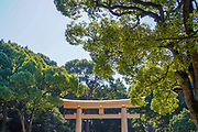 Renovated torii gate at Meiji Jingu. Meiji Shrine located in Shibuya, Tokyo, is the Shinto shrine that is dedicated to the deified spirits of Emperor Meiji and his wife, Empress Shōken
