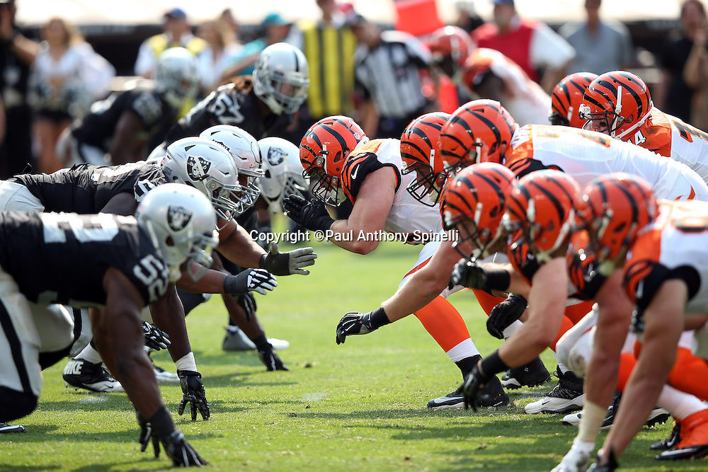 The Cincinnati Bengals offensive line snaps the ball at the line of scrimmage opposite the Oakland Raiders defensive line during the 2015 NFL week 1 regular season football game against the Oakland Raiders on Sunday, Sept. 13, 2015 in Oakland, Calif. The Bengals won the game 33-13. (©Paul Anthony Spinelli)