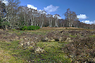 Matley Bog in the New Forest near Lyndhurst, Hampshire