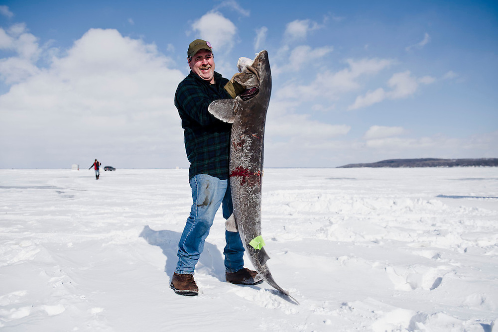 "STOCKBRIDGE, WI -FEB. 17, 2015: Steve Krueger, 48, holds his speared sturgeon outside the shanty Tuesday, Feb. 17, 2015 before taking it to the registration station. The shanty in which Krueger sits has caught a fish a day since the start of the season, making his the fourth in his family for 2015. His sturgeon weighed in at 89lbs and 71.5"". 13,000 licenses were sold for the 2015 sturgeon spearing season which started Feb. 14, 2015 and lasted until Feb. 21, 2015 on Lake Winnebago with a total of 1870 sturgeon speared. The average success rate for spearers is 10-12% and some people go years without spotting anything from their shanty. Lauren Justice for The New York Times"